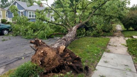 Tree ripped out of the ground by the roots in a city neighborhood