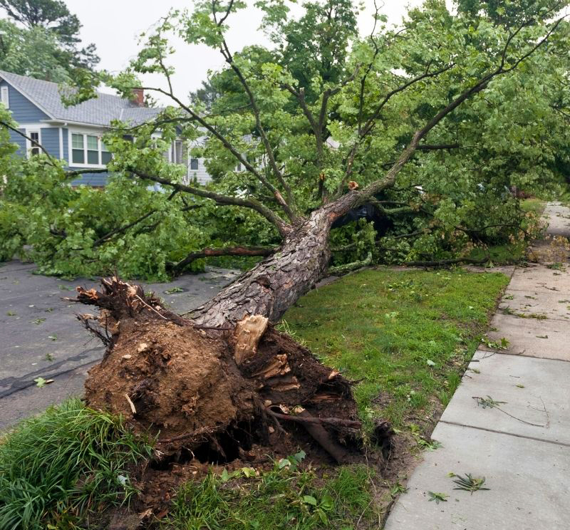 Tree pulled out by the roots on neighborhood street