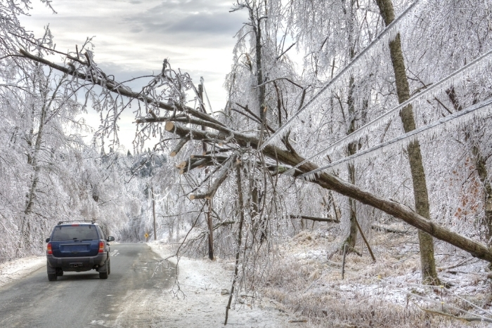 Tree down on power lines following ice storm