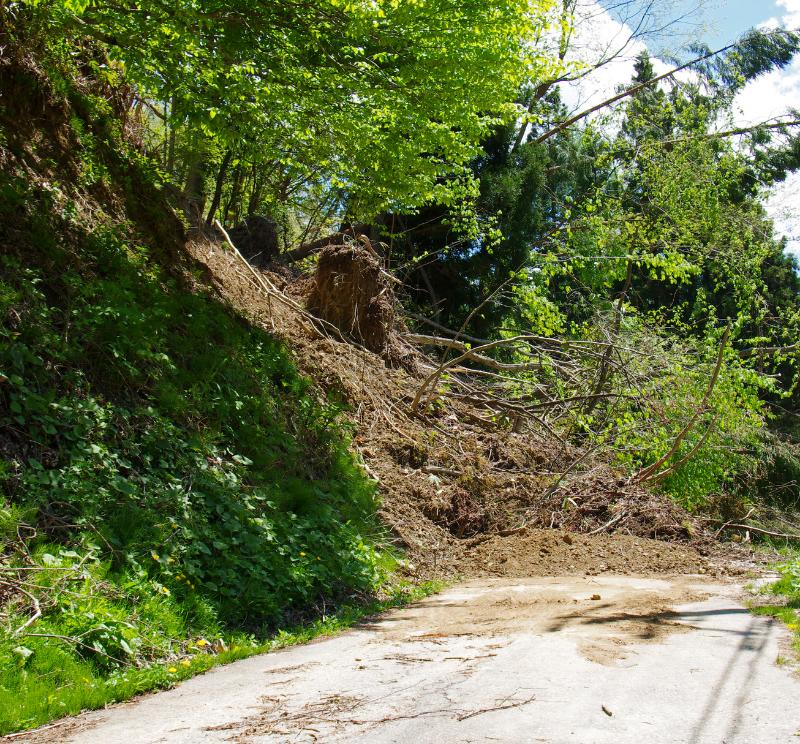 Landslide of dirt and trees have fallen across road