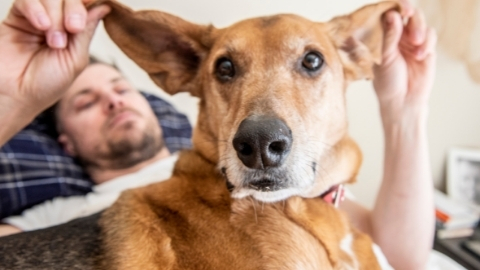 Man posing with dog by holding up his ears