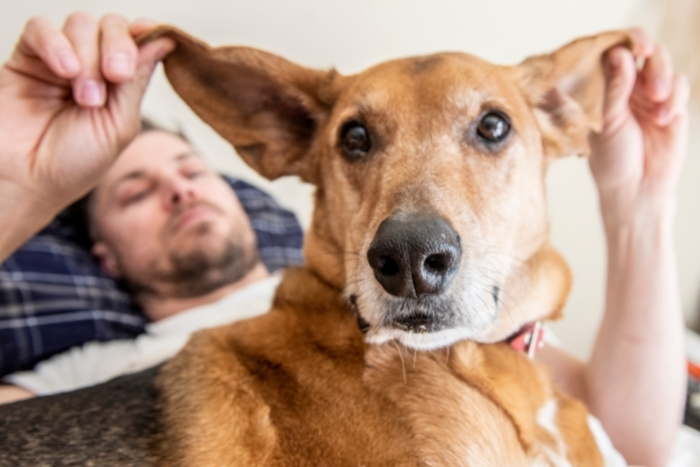 Man lying in bed playing with dog's ears